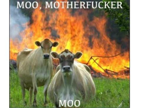 Moo motherfucker