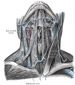 front of neck